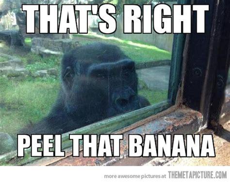 Funny Stalker Memes - stalker gorilla the meta picture