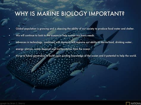 Marine Biology By Katie Armstrong Marine Biology Powerpoint