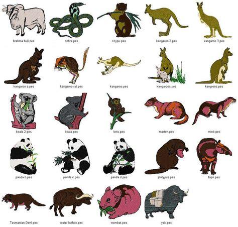 google images animals australian animals google search australia pinterest