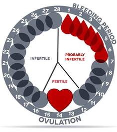 Menstrual Cycle And Ovulation Calendar Reliable Menstrual Period Calculator Calendar Track