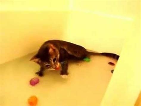 cat swimming in bathtub cat loves to swim in the bath funnycat tv