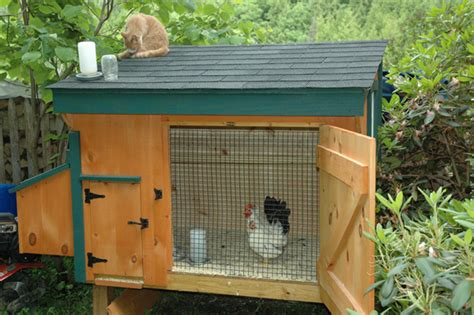 chicken coop designs a small chicken coop