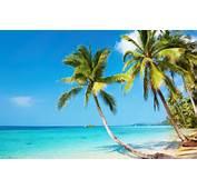 Tropical Beach 4K Ultra HD Wallpaper  4k WallpaperNet