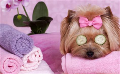 professional shoo and conditioner grooming by professional groomer