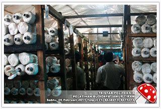 Bibit Jamur Tiram Di Surabaya pelatihan wira usaha budidaya jamur tiram di dataran