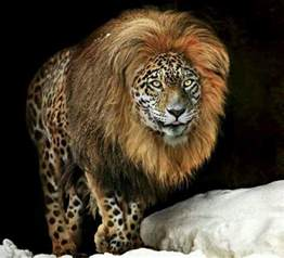 Lions And Jaguars Animals Panion Beautiful Animals