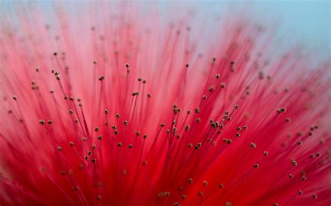 wallpaper flower macro flower close up macro wallpaper 1680x1050 22868
