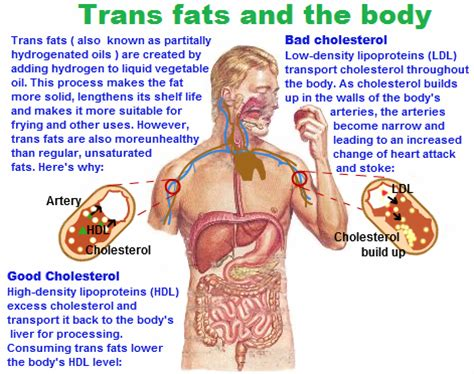 healthy fats chemistry trans fatty acids trans fatty acids definition cis and