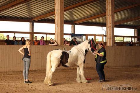 pferd liegen beibringen zirkuslektionen pferd was sie alles f 252 r eure pferde tun