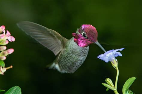 flowers  attract hummingbirds hunker