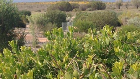 Australian Arid Lands Botanic Garden Understorey Arid Lands Abundance 171 Rtrfm The Sound Alternative