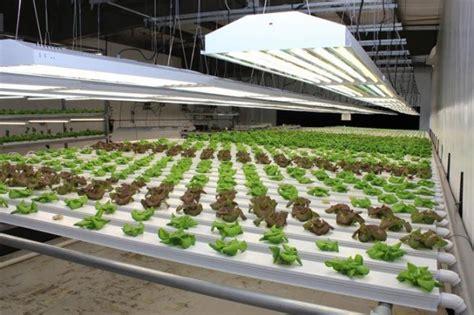 vasca idroponica come avviare una coltivazione idroponica bianco lavoro