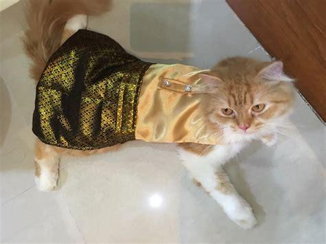 Baju Anjing Dan Kucing Baseball Ungu trend si comel melaram viral di laman sosial
