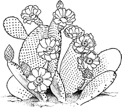 Cactus Flower Coloring Page | blossom cactus flower coloring pages blossom cactus