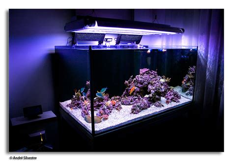 saltwater aquarium aquascape designs home design stunning 360 degree saltwater aquarium