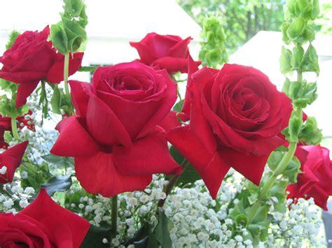 remember  roses  rose journal