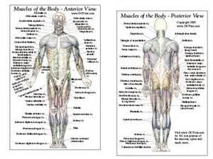 Anatomy Of The Body » Home Design 2017