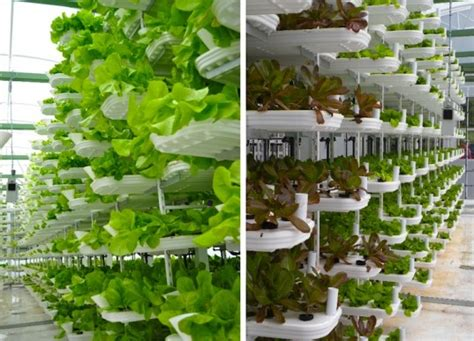 Vertical Hydroponic Garden Plans Verticrop Processes 10 000 Plants Every 3 Days Using