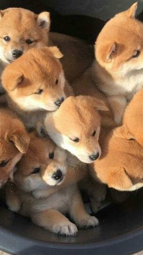 cute dog wallpapers for android desktop wallpaper box cute puppies pictures android wallpaper 2018 android