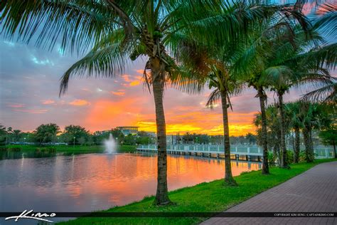 Palm Gardens Downtown by Coconut Trees Downtown At Palm Gardens Florida