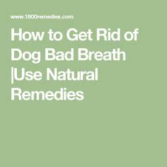 how to get your dog to use the bathroom outside 1000 ideas about dog breath on pinterest bad dog breath