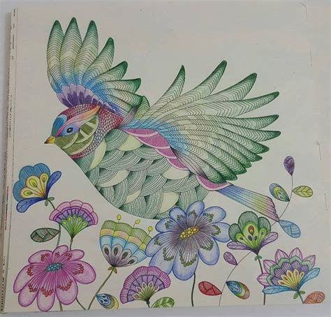 libro millie marottas beautiful birds 78 best images about millie morotta coloring book ideas on coloring here i go again