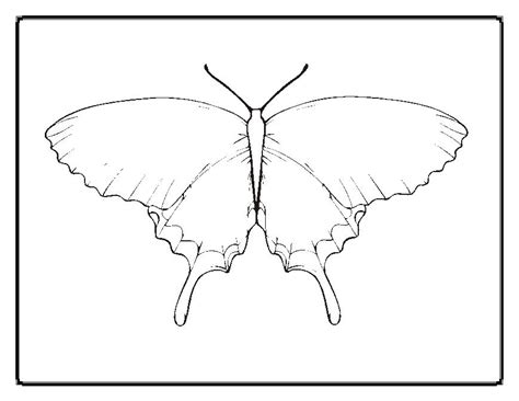 caterpillar egg coloring page free coloring pages of butterfly egg