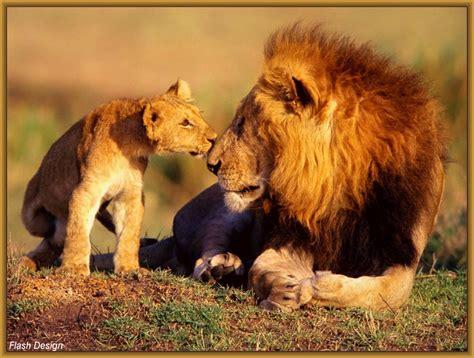 imagenes abstractas de leones fotos de leones cachorros archivos imagenes de leones