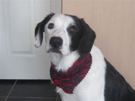 knitting pattern dog scarf knitted dog bandana dog scarf