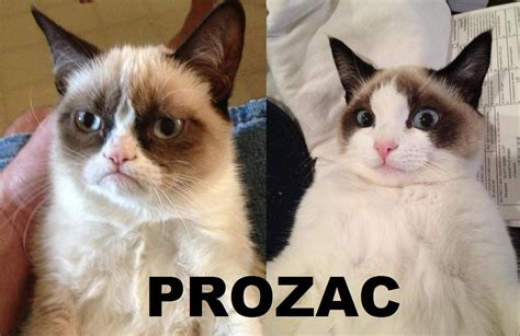 Cat Pictures Meme - favorite grumpy cat meme