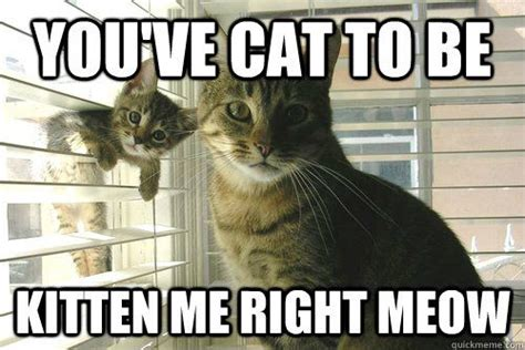 Cat Meow Meme - you ve cat to be kitten me right meow for kimber pinterest