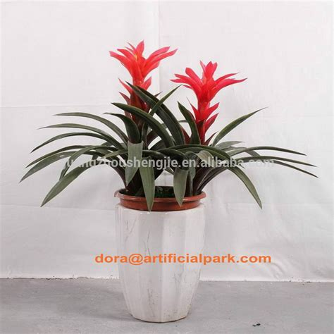 cheap indoor plants 100 cheap indoor plants 274 best indoor plants images on plants indoor interior