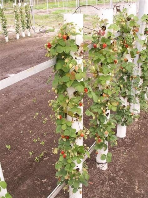 how to grow a vertical garden growing strawberries vertically creative gardening