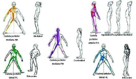 cadenas musculares anteriores cadenas musculares m 201 todo gds loinaz roldan