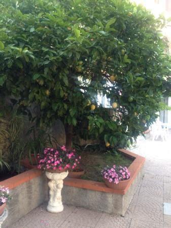 hotel giardino finale ligure giardino bild orchidea residence hotel finale