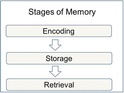 define memory organization in detail all in one tuts memory encoding storage and retrieval simply psychology