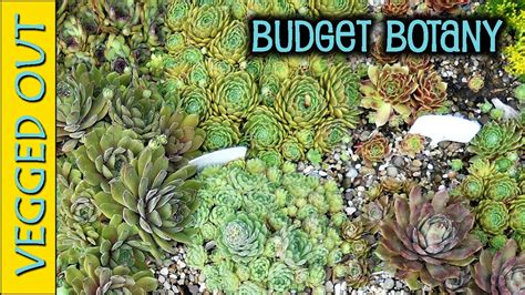 Beginner S Guide To Growing Succulents Garden - succulents gardening on a budget cheap tools supplies