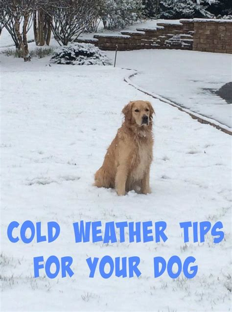 cold weather dogs vital cold weather tips for dogs to home