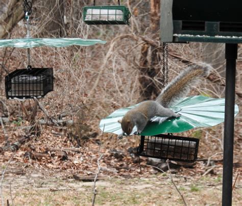 suet feeder squirrel proof wiring diagrams wiring