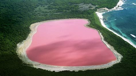Pink Lake Australia | pink lake hillier australia world for travel