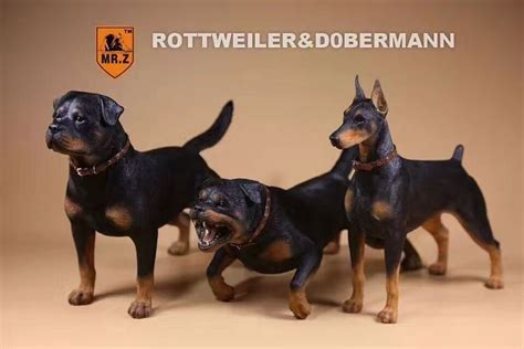 rottweiler accessories 1 6 realistic german rottweiler model model accessories decoration