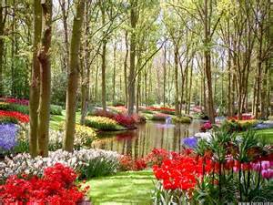 Colorful Garden Flowers Naturals Colorful Flower Land