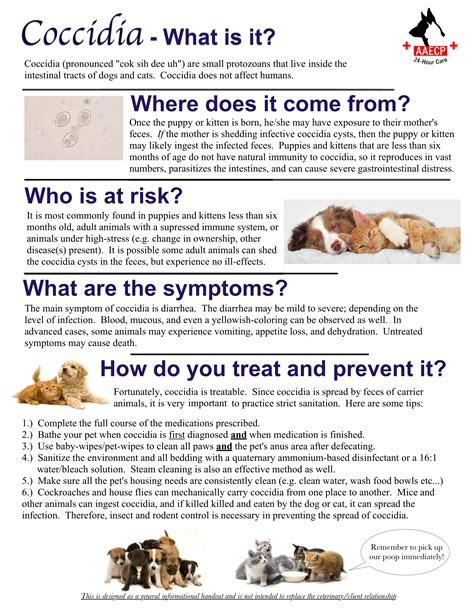 coccidia dogs pet info forms animal am emergency clinic