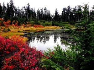 of washington colors fall colors in washington state photograph by higgins
