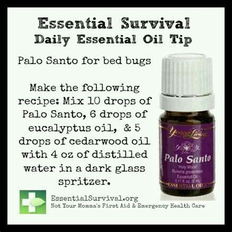 essential oils for bed bugs 13 best images about palo santo young living on pinterest