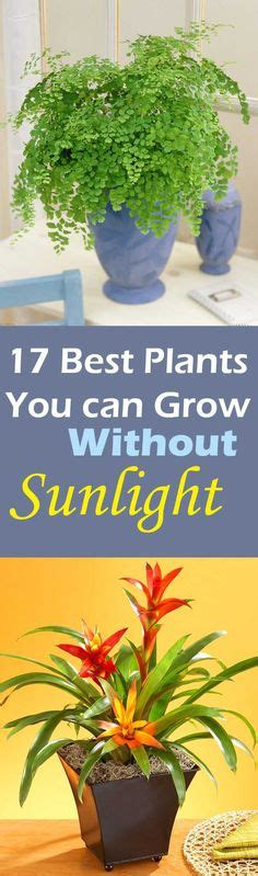 10 best plants you can grow indoors for air purification 17 best plants to grow indoors without sunlight plants