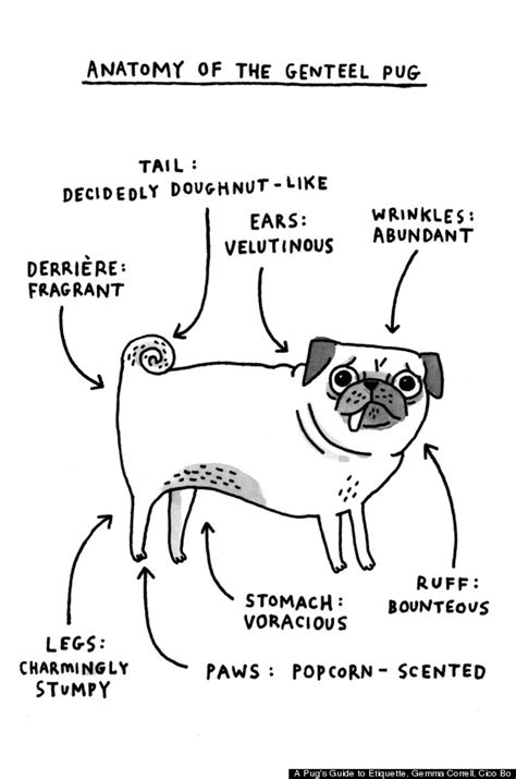 pug etiquette a pug s guide to etiquette by gemma correll gets into the mind of nature s cutest