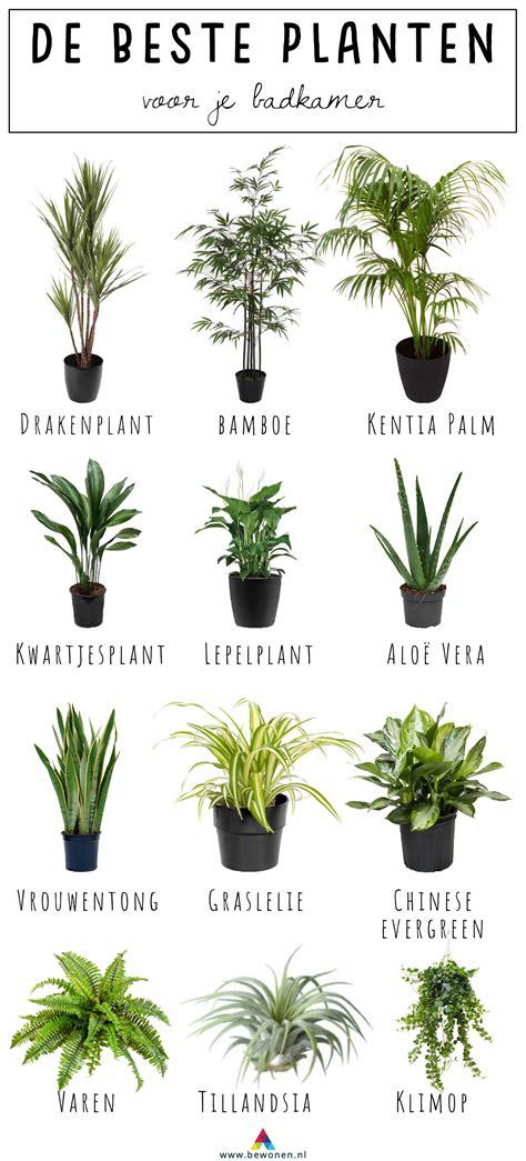 planten in badkamer 12x de beste planten voor badkamer