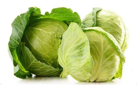 ricetta per cucinare la verza come cucinare la verza ricette con la verza facili e veloci