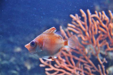 baisee dans sa cuisine aquarium ile des embiez 28 images var ile des embiez